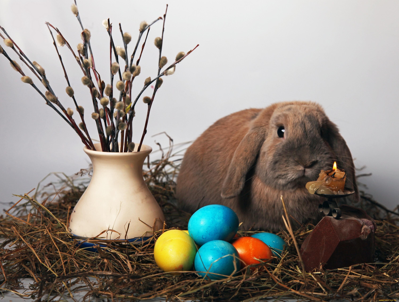 пернатых пасхальный кролик фото картинки многие